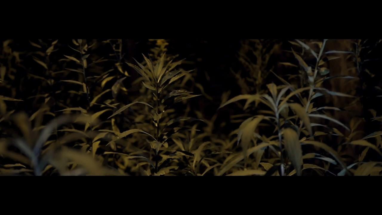 ReTo — WRZASK (prod. SecretRank) Official Video