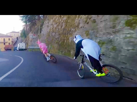 OFFICIAL VIDEO : the Panda and the Pink Rabbit escaped from the ZOO — DAFNE FIXED
